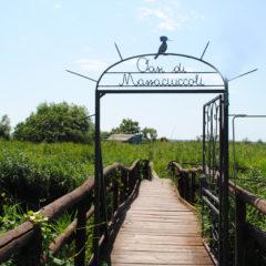 Natural Park Oasi di Migliarino S.Rossore